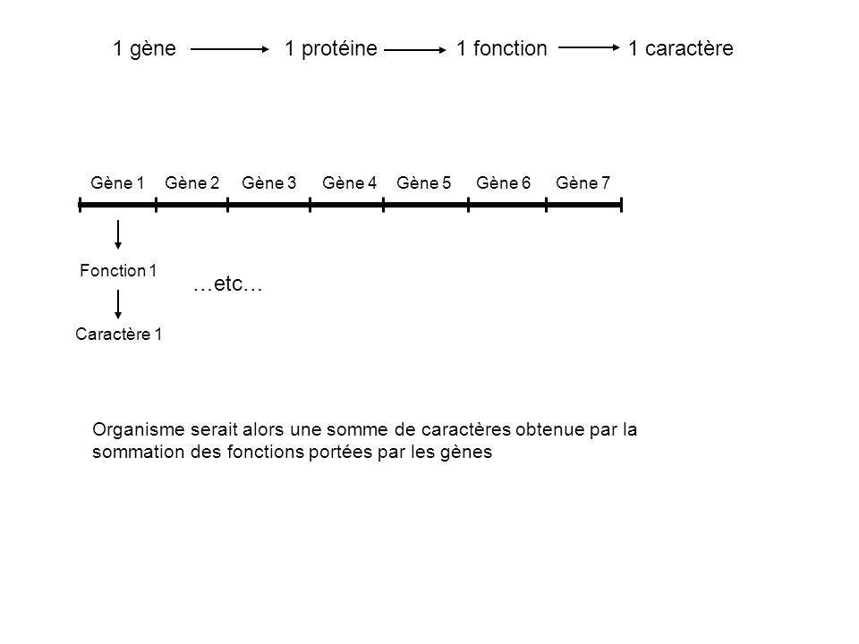 Gène 1Gène 2Gène 3Gène 4Gène 5Gène 6Gène 7 Caractère 1 Fonction 1 …etc… 1 gène1 protéine1 fonction1 caractère Organisme serait alors une somme de cara