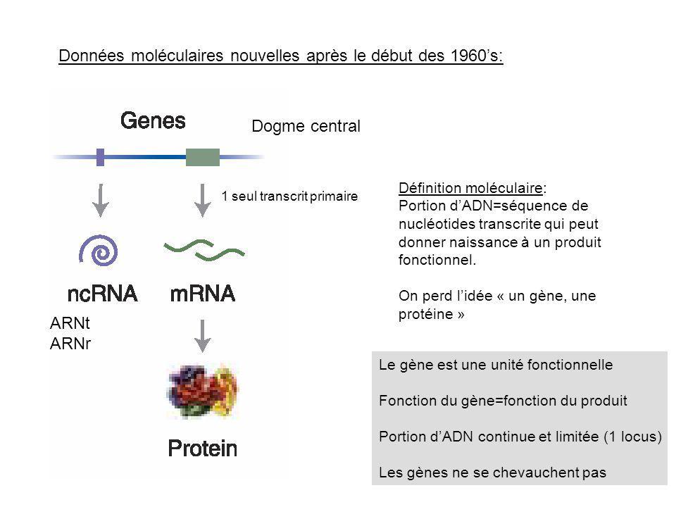 Données moléculaires nouvelles après le début des 1960s: Dogme central ARNt ARNr Définition moléculaire: Portion dADN=séquence de nucléotides transcri