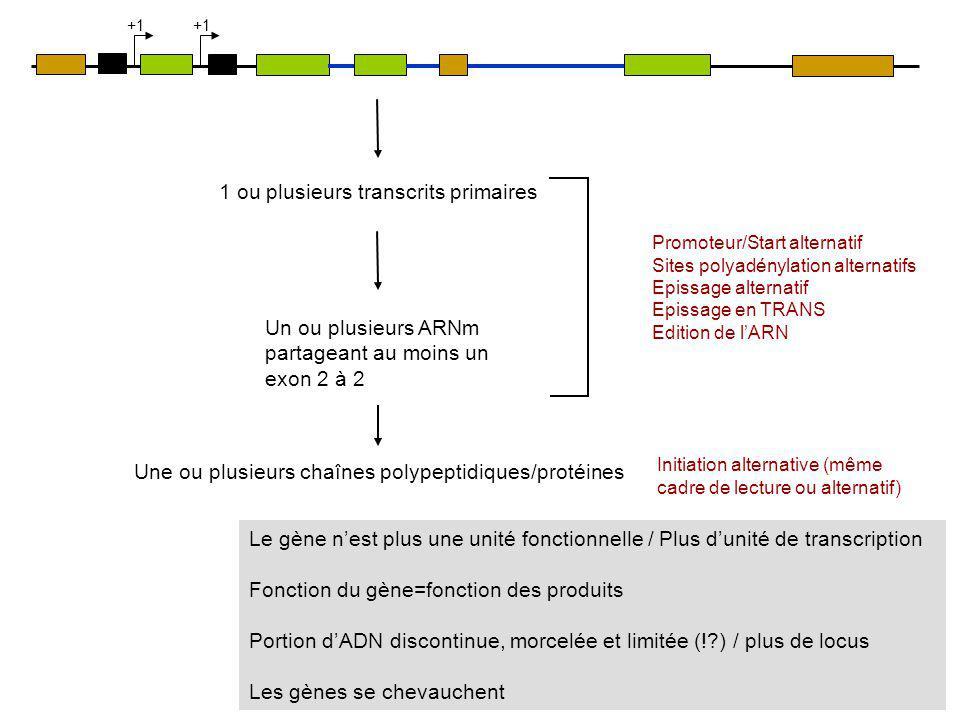 Un ou plusieurs ARNm partageant au moins un exon 2 à 2 Une ou plusieurs chaînes polypeptidiques/protéines Promoteur/Start alternatif Sites polyadényla