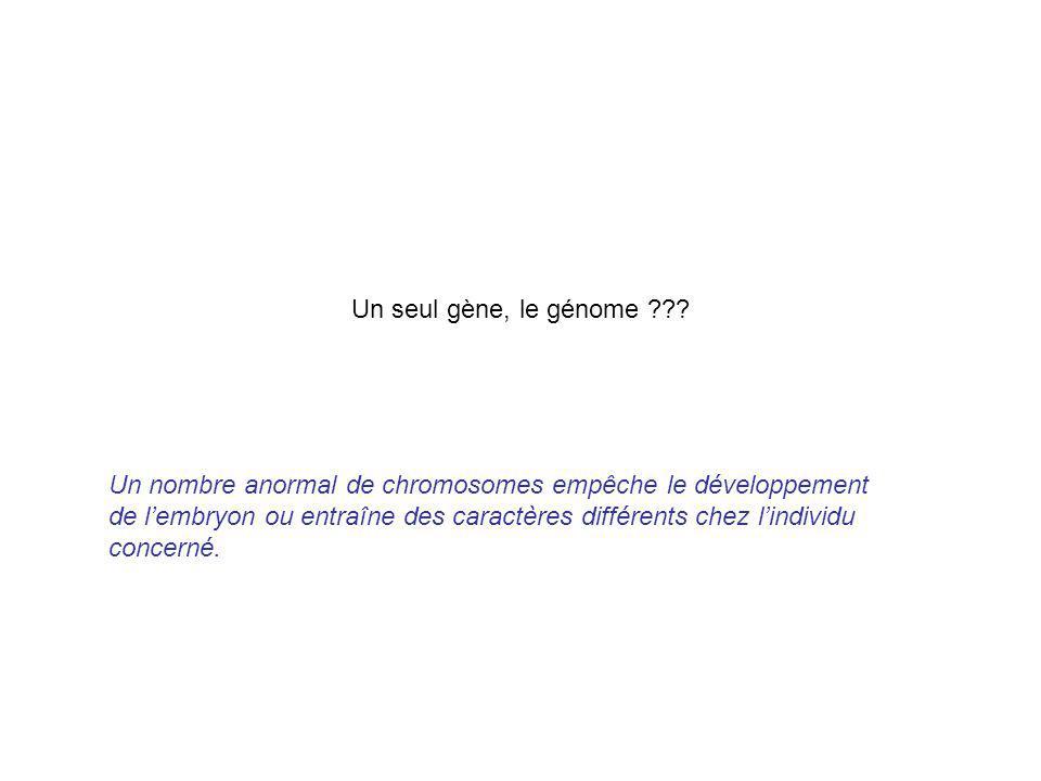 Un seul gène, le génome ??? Un nombre anormal de chromosomes empêche le développement de lembryon ou entraîne des caractères différents chez lindividu
