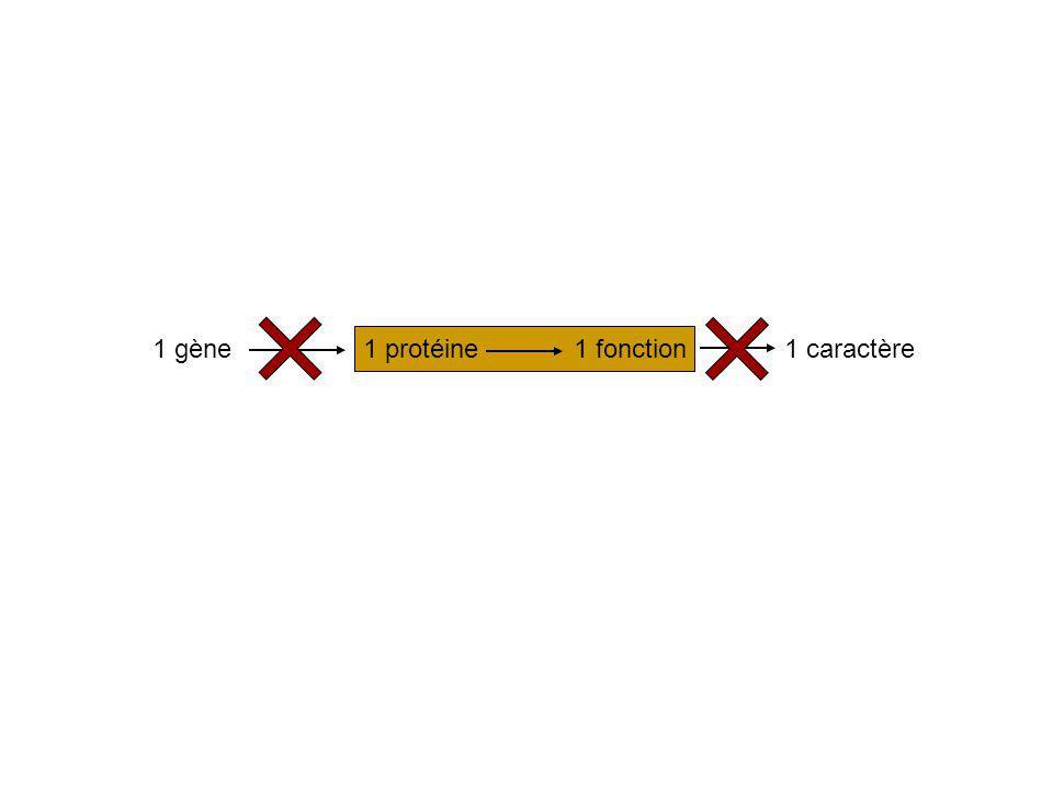 1 gène1 protéine1 fonction1 caractère