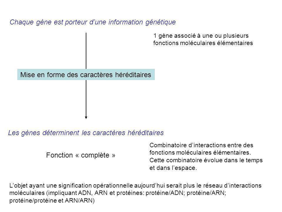 Les gènes déterminent les caractères héréditaires Chaque gène est porteur dune information génétique 1 gène associé à une ou plusieurs fonctions moléc