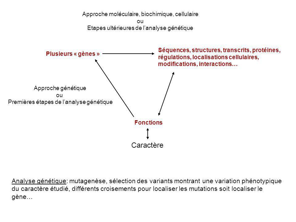 Plusieurs « gènes » Séquences, structures, transcrits, protéines, régulations, localisations cellulaires, modifications, interactions… Fonctions Appro