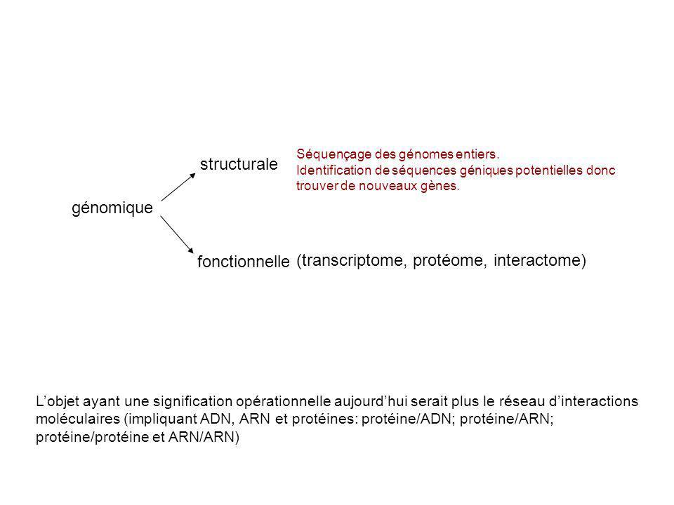 génomique structurale fonctionnelle (transcriptome, protéome, interactome) Lobjet ayant une signification opérationnelle aujourdhui serait plus le rés
