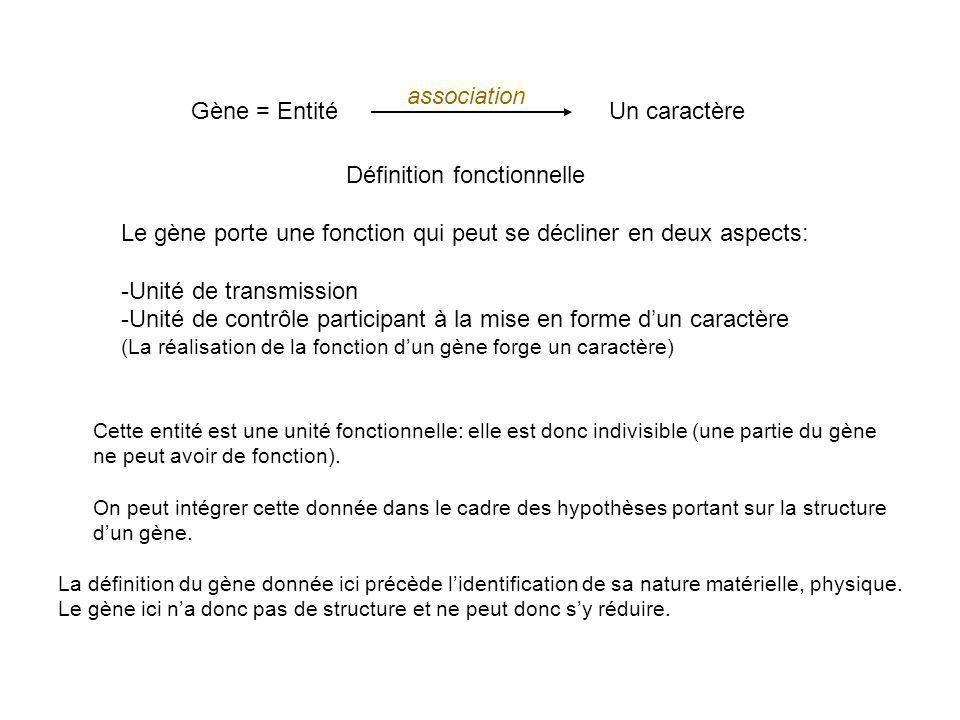 Gène = EntitéUn caractère Définition fonctionnelle Le gène porte une fonction qui peut se décliner en deux aspects: -Unité de transmission -Unité de c