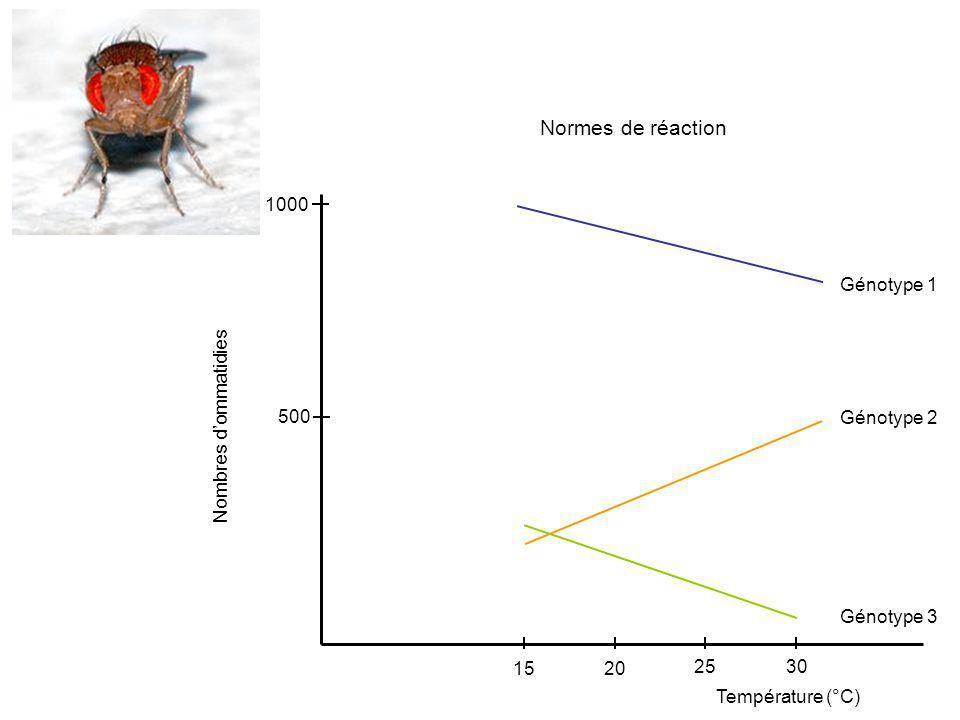1000 500 Nombres dommatidies Température (°C) 15 20 25 30 Génotype 1 Génotype 2 Génotype 3 Normes de réaction