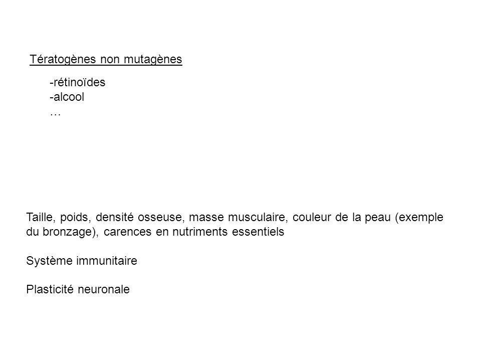 Tératogènes non mutagènes -rétinoïdes -alcool … Taille, poids, densité osseuse, masse musculaire, couleur de la peau (exemple du bronzage), carences e