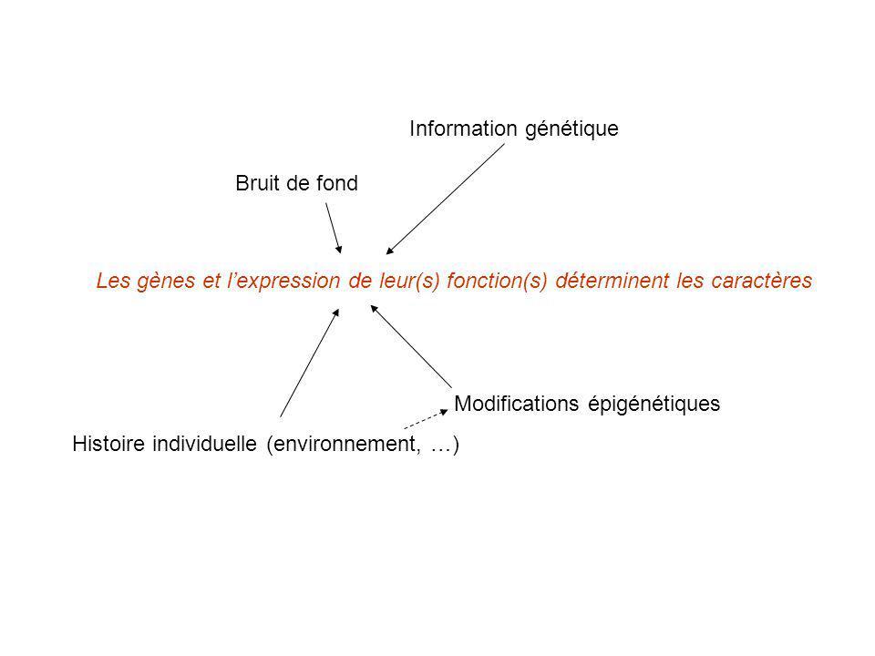 Les gènes et lexpression de leur(s) fonction(s) déterminent les caractères Histoire individuelle (environnement, …) Bruit de fond Information génétiqu