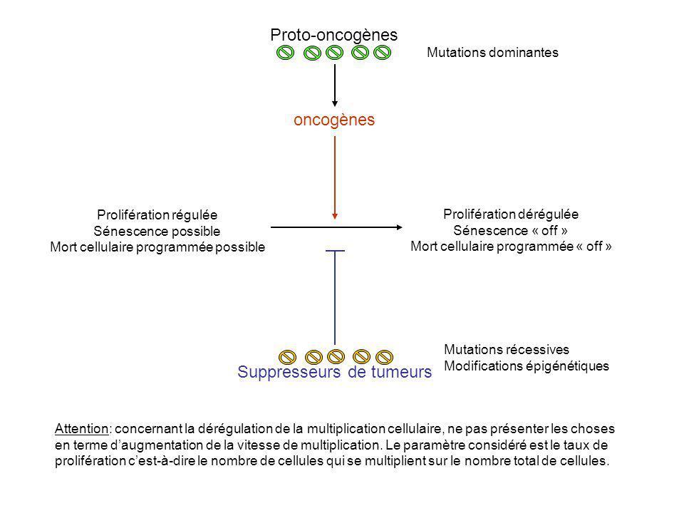 Prolifération régulée Sénescence possible Mort cellulaire programmée possible Prolifération dérégulée Sénescence « off » Mort cellulaire programmée «