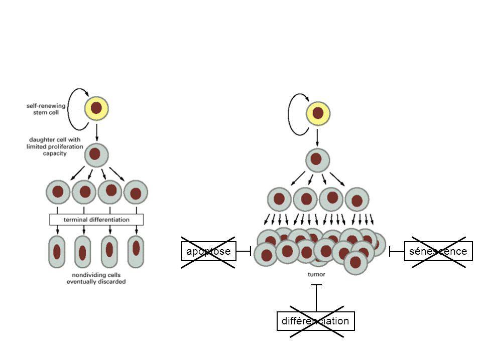 apoptosesénescence différenciation