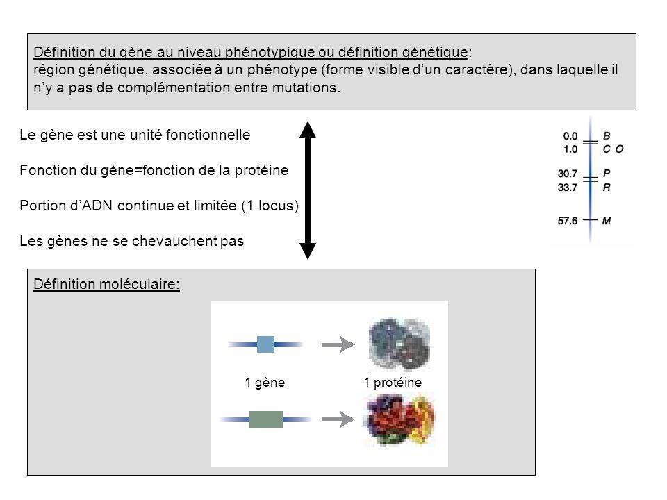Définition du gène au niveau phénotypique ou définition génétique: région génétique, associée à un phénotype (forme visible dun caractère), dans laque