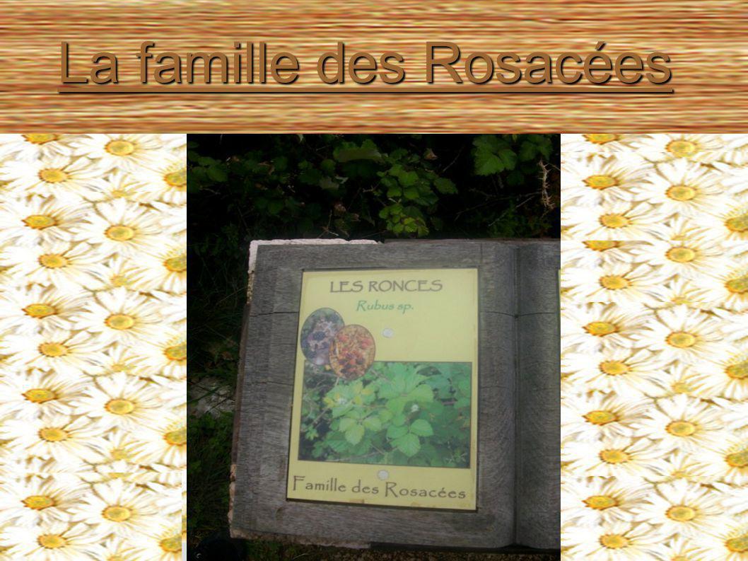 La famille des Rosacées