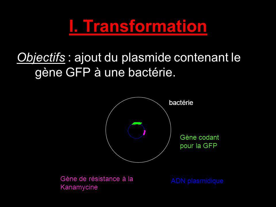 I. Transformation Objectifs : ajout du plasmide contenant le gène GFP à une bactérie. bactérie Gène codant pour la GFP ADN plasmidique Gène de résista