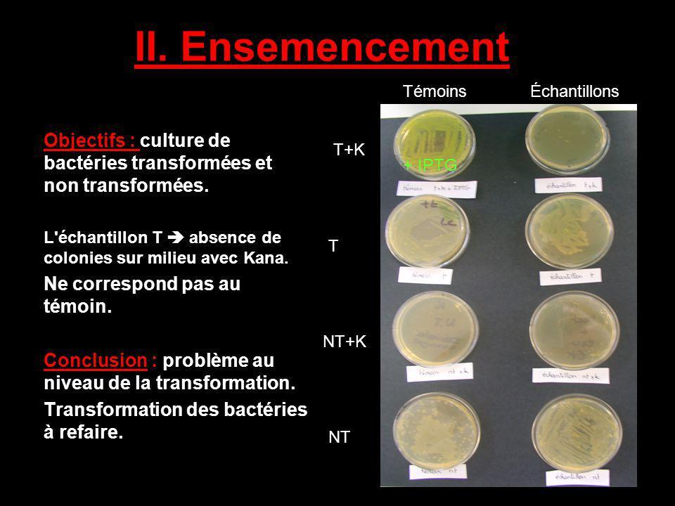 II. Ensemencement Objectifs : culture de bactéries transformées et non transformées. L'échantillon T absence de colonies sur milieu avec Kana. Ne corr
