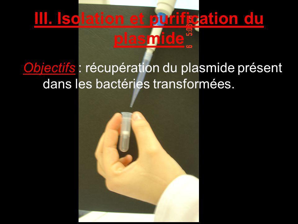 Objectifs : récupération du plasmide présent dans les bactéries transformées. III. Isolation et purification du plasmide