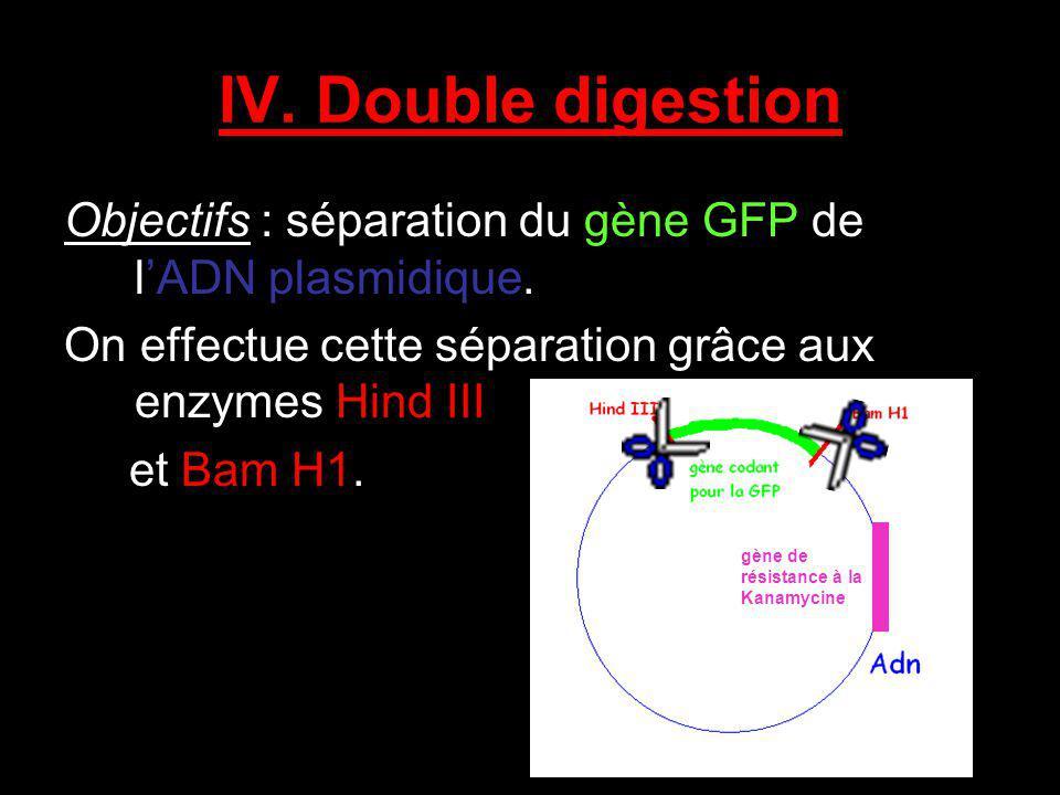 IV. Double digestion Objectifs : séparation du gène GFP de lADN plasmidique. On effectue cette séparation grâce aux enzymes Hind III et Bam H1. gène d