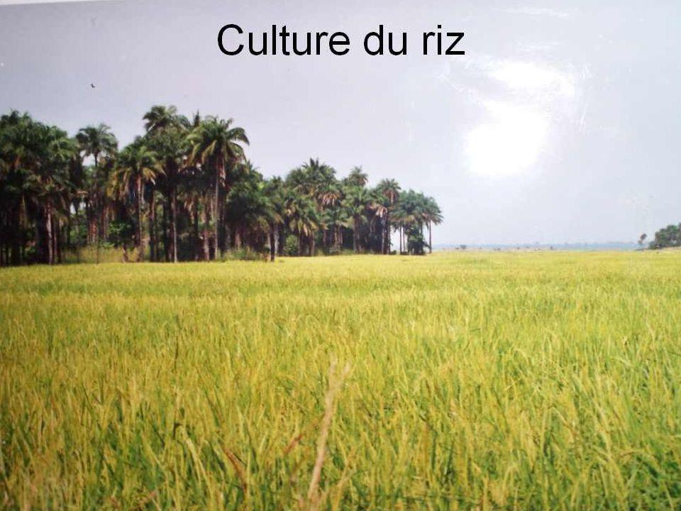 Agriculture et pêche Lagriculture, si elle ne rapporte pas beaucoup au pays, occupe la majorité de la population et la totalité dans les zones rurales