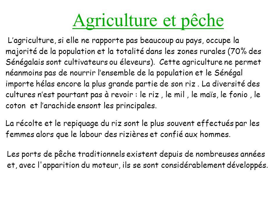 Agriculture et pêche Lagriculture, si elle ne rapporte pas beaucoup au pays, occupe la majorité de la population et la totalité dans les zones rurales (70% des Sénégalais sont cultivateurs ou éleveurs).
