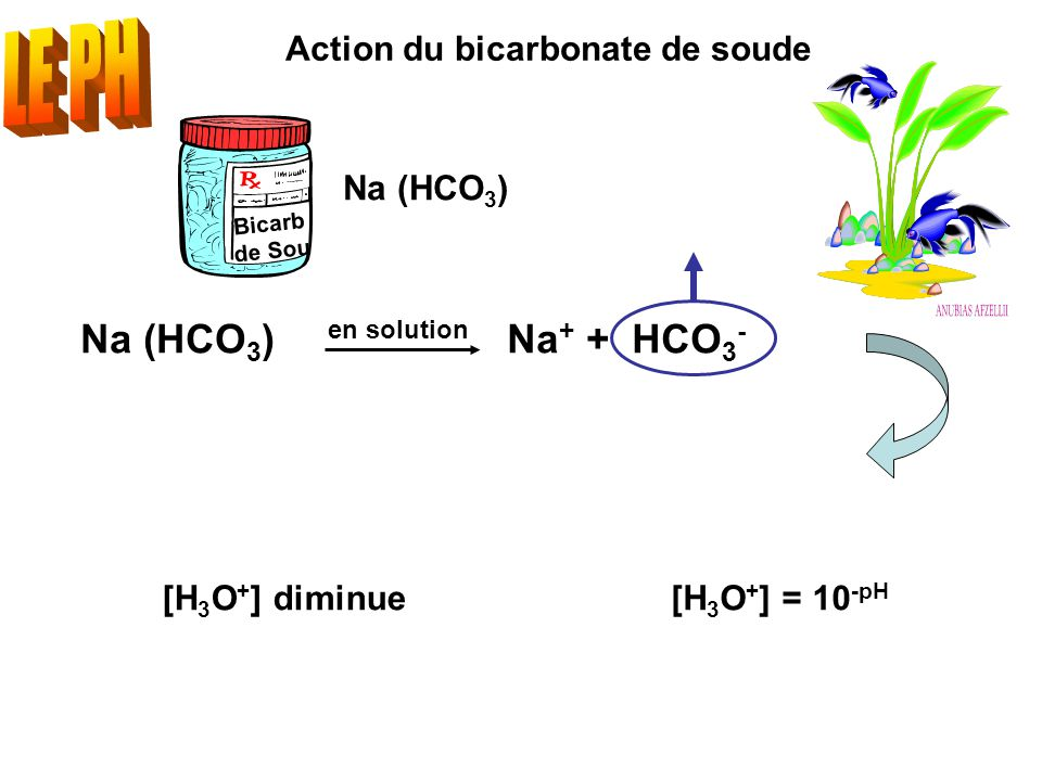 Bicarb de Sou Action du bicarbonate de soude Na (HCO 3 ) en solution Na + + HCO 3 - [H 3 O + ] = 10 -pH [H 3 O + ] diminue