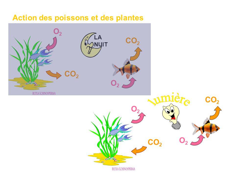 Action des poissons et des plantes LA NUIT CO 2 O2O2 O2O2 O2O2 O2O2