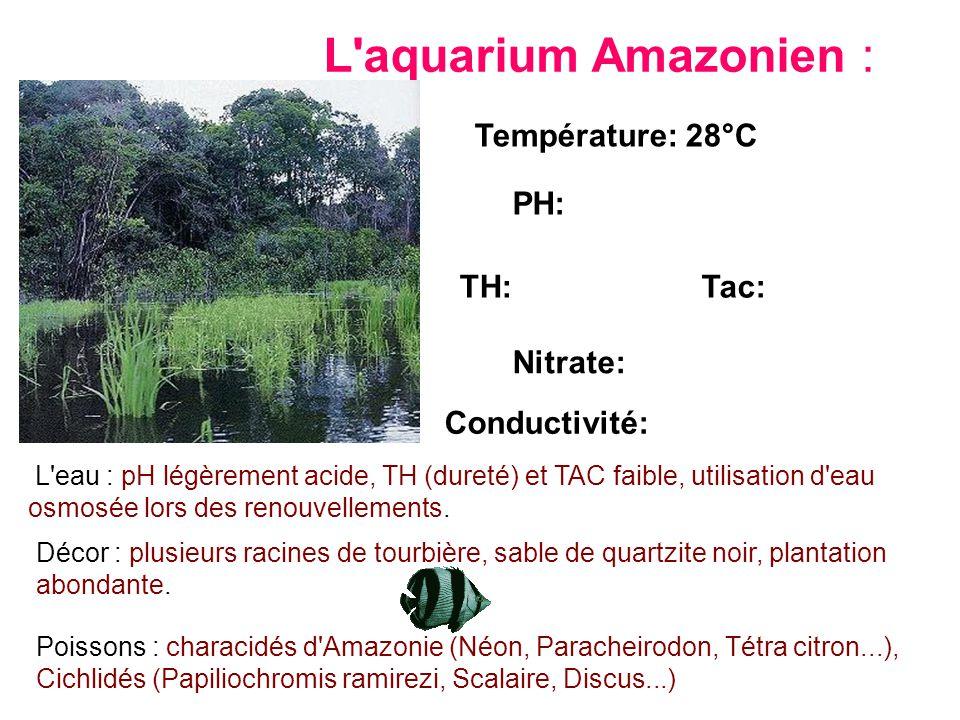 L'aquarium Amazonien : L'eau : pH légèrement acide, TH (dureté) et TAC faible, utilisation d'eau osmosée lors des renouvellements. Température: 28°C P