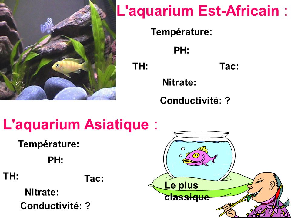 L'aquarium Est-Africain : Température: PH: TH: Nitrate: Tac: Conductivité: ? L'aquarium Asiatique : Température: PH: TH: Nitrate: Tac: Conductivité: ?
