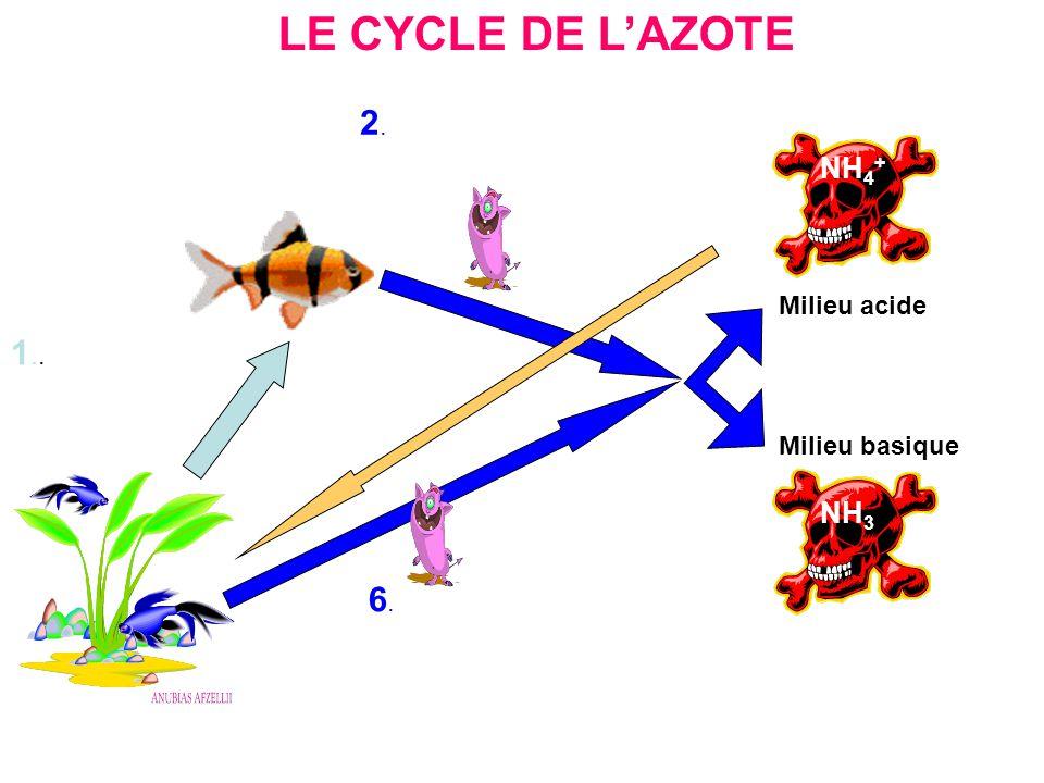 LE CYCLE DE LAZOTE NH 3 NH 4 + NO 2 - 1 2 6 NO 3 - 3.3. 7.7. 4.4. 5.5.