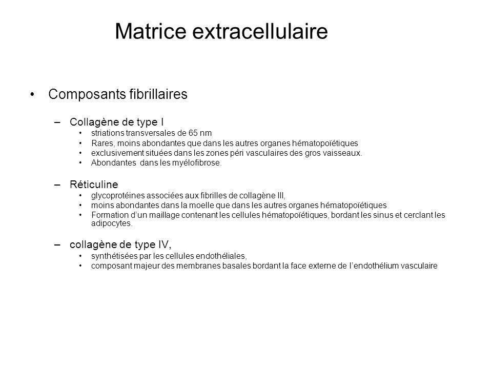 Matrice extracellulaire Composants fibrillaires –Collagène de type I striations transversales de 65 nm Rares, moins abondantes que dans les autres org