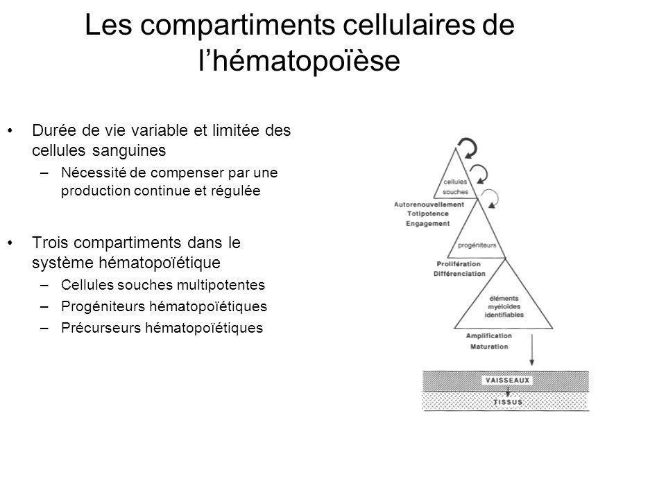 Durée de vie variable et limitée des cellules sanguines –Nécessité de compenser par une production continue et régulée Trois compartiments dans le sys