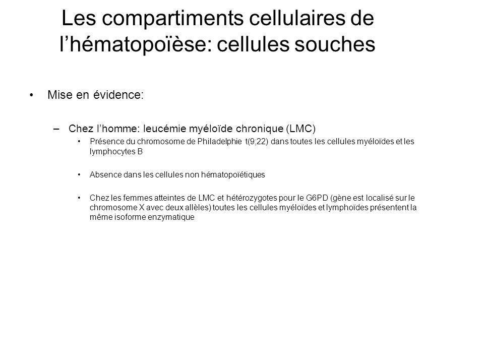 Les compartiments cellulaires de lhématopoïèse: cellules souches Mise en évidence: –Chez lhomme: leucémie myéloïde chronique (LMC) Présence du chromosome de Philadelphie t(9;22) dans toutes les cellules myéloïdes et les lymphocytes B Absence dans les cellules non hématopoïétiques Chez les femmes atteintes de LMC et hétérozygotes pour le G6PD (gène est localisé sur le chromosome X avec deux allèles) toutes les cellules myéloïdes et lymphoïdes présentent la même isoforme enzymatique