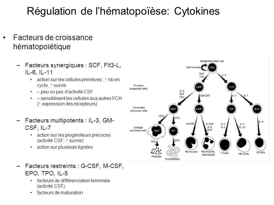 Facteurs de croissance hématopoïétique –Facteurs synergiques : SCF, Flt3-L, IL-6, IL-11 action sur les cellules primitives : nb en cycle, survie – peu ou pas dactivité CSF – sensiblisent les cellules aux autres FCH ( expression des récepteurs) –Facteurs multipotents : IL-3, GM- CSF, IL-7 action sur les progéniteurs précoces (activité CSF, survie) action sur plusieurs lignées –Facteurs restreints : G-CSF, M-CSF, EPO, TPO, IL-5 facteurs de différenciation terminale (activité CSF) facteurs de maturation Régulation de lhématopoïèse: Cytokines
