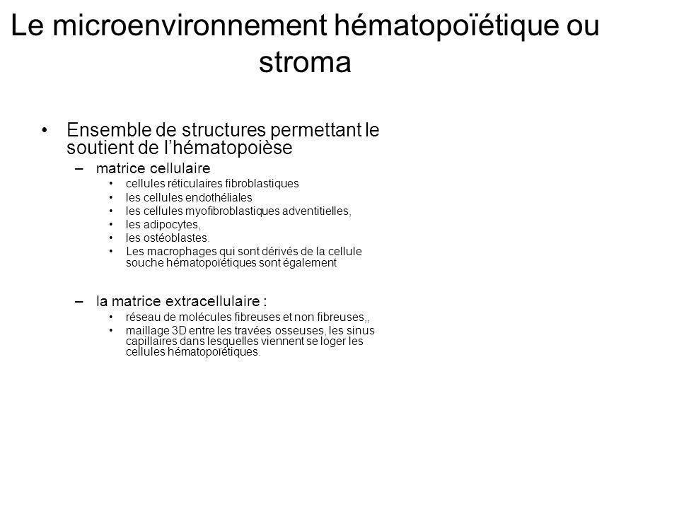 Le microenvironnement hématopoïétique ou stroma Ensemble de structures permettant le soutient de lhématopoièse –matrice cellulaire cellules réticulaires fibroblastiques les cellules endothéliales les cellules myofibroblastiques adventitielles, les adipocytes, les ostéoblastes.