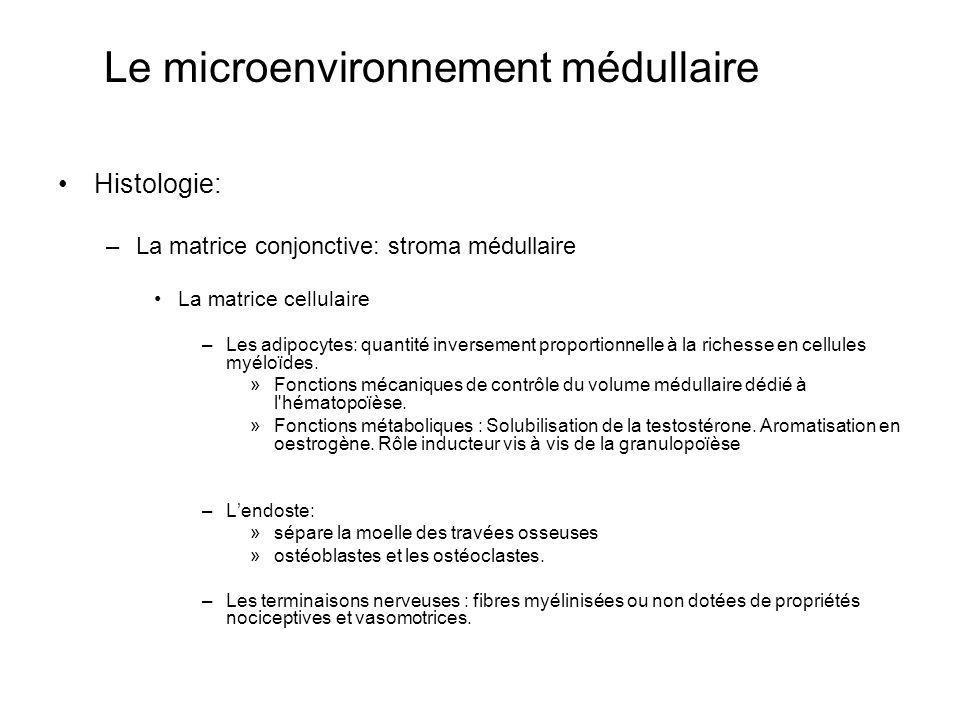 Le microenvironnement médullaire Histologie: –La matrice conjonctive: stroma médullaire La matrice cellulaire –Les adipocytes: quantité inversement pr