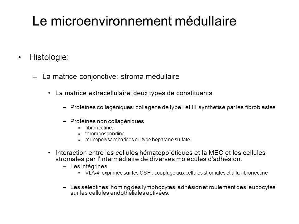 Le microenvironnement médullaire Histologie: –La matrice conjonctive: stroma médullaire La matrice extracellulaire: deux types de constituants –Protéines collagéniques: collagène de type I et III synthétisé par les fibroblastes –Protéines non collagéniques »fibronectine, »thrombospondine »mucopolysaccharides du type héparane sulfate Interaction entre les cellules hématopoïétiques et la MEC et les cellules stromales par l intermédiaire de diverses molécules d adhésion: –Les intégrines »VLA-4 exprimée sur les CSH : couplage aux cellules stromales et à la fibronectine –Les sélectines: homing des lymphocytes, adhésion et roulement des leucocytes sur les cellules endothéliales activées.
