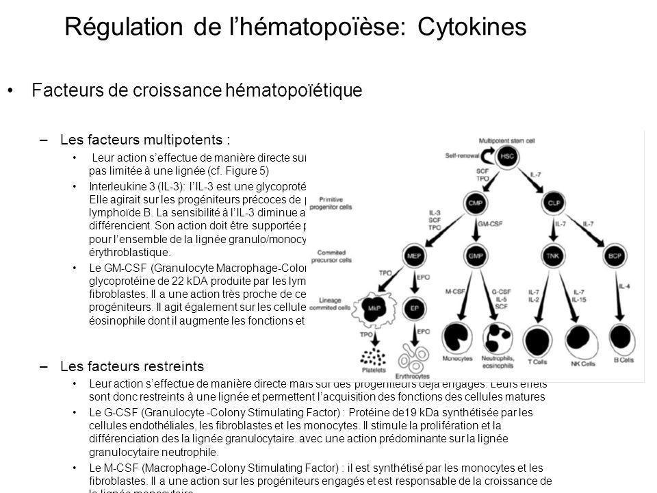 Facteurs de croissance hématopoïétique –Les facteurs multipotents : Leur action seffectue de manière directe sur des progéniteurs précoces.