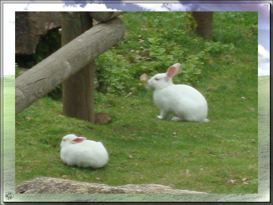 Pour le lapin les phrases ne manquent pas Ça na aucune valeur, alors ça ne vaut pas un pet de lapin. Il est séducteur, quel chaud lapin ! Détaler comm