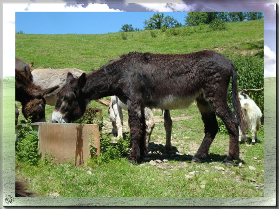 Pour les expressions sur l ANE cest ceci … Le cancre, lignare, lesprit borné cest un âne bâté.
