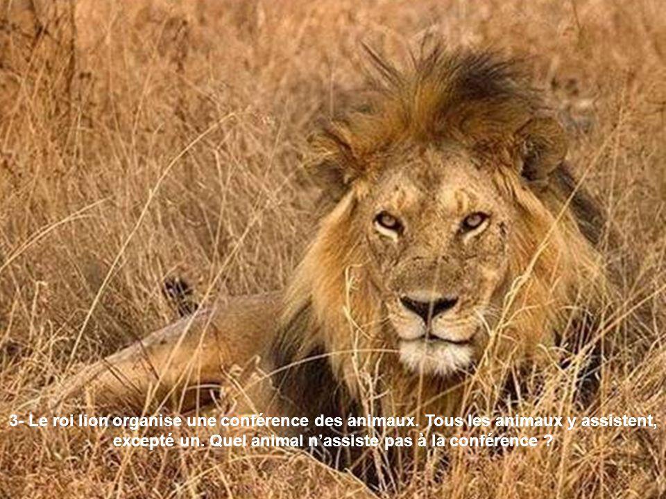3- Le roi lion organise une conférence des animaux. Tous les animaux y assistent, excepté un. Quel animal nassiste pas à la conférence ?