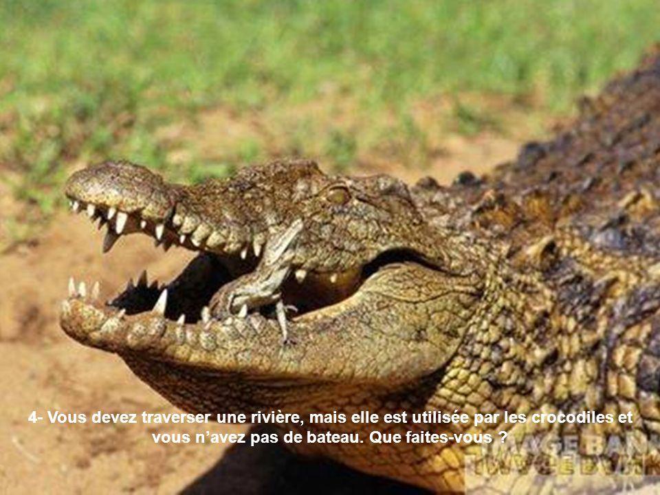 4- Vous devez traverser une rivière, mais elle est utilisée par les crocodiles et vous navez pas de bateau. Que faites-vous ?