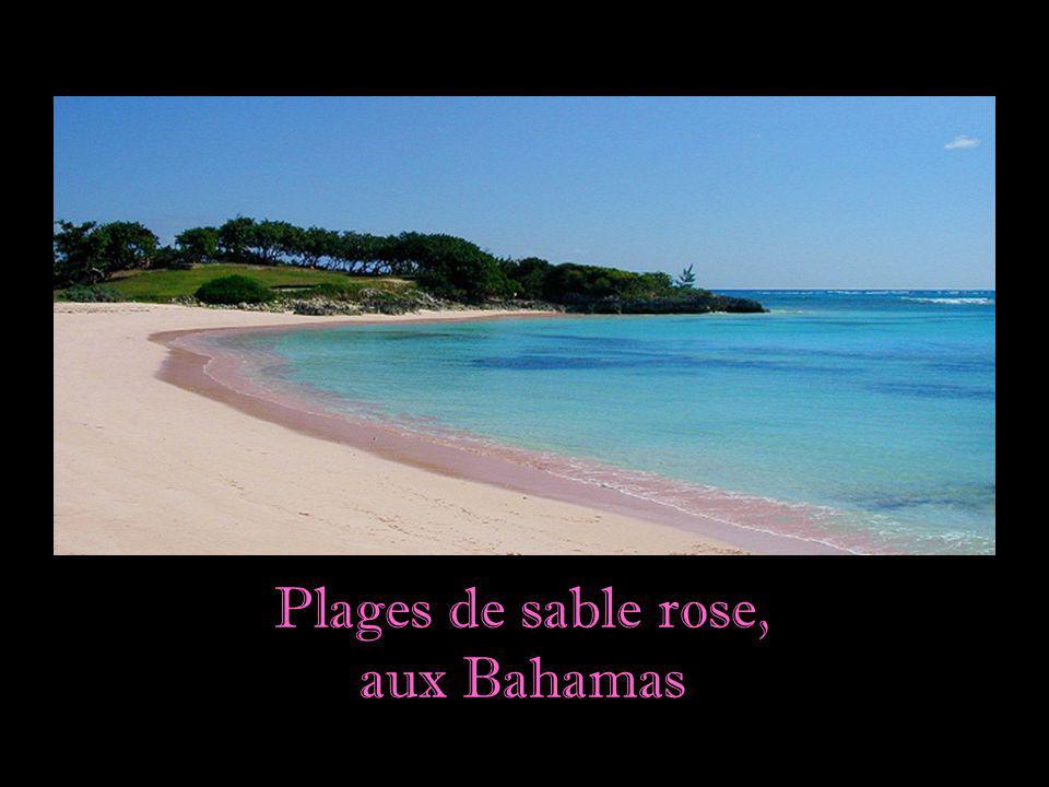 Les plages de sable d'or sont associées à l'idée du paradis terrestre. Mais les plages, comme presque tous les paysages de cette planète, sont pour to