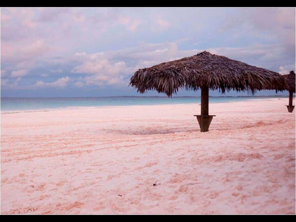 Coral Pink Sand Beach est une plage entre palmiers et sable rose de Harbour Island, aux Bahamas.