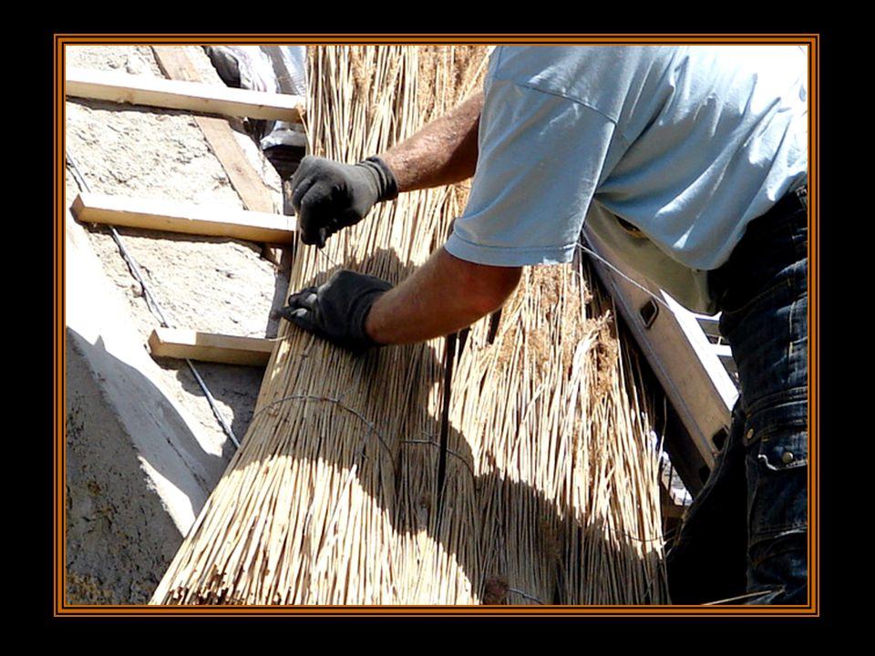 Chaque botte est attachée ensuite aux liteaux par une boucle de fil de fer galvanisé.