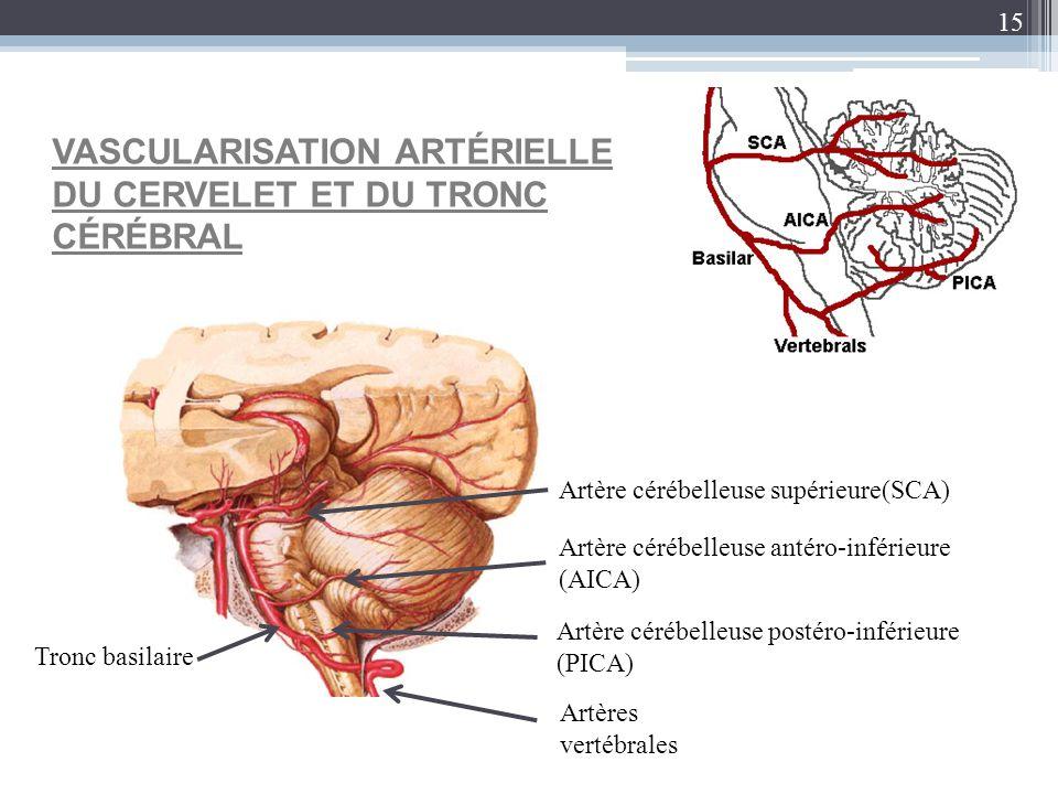 15 VASCULARISATION ARTÉRIELLE DU CERVELET ET DU TRONC CÉRÉBRAL Artère cérébelleuse supérieure(SCA) Artère cérébelleuse antéro-inférieure (AICA) Tronc
