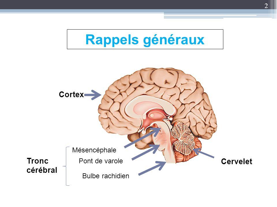 2 Rappels généraux Mésencéphale Pont de varole Bulbe rachidien Cervelet Cortex Tronc cérébral