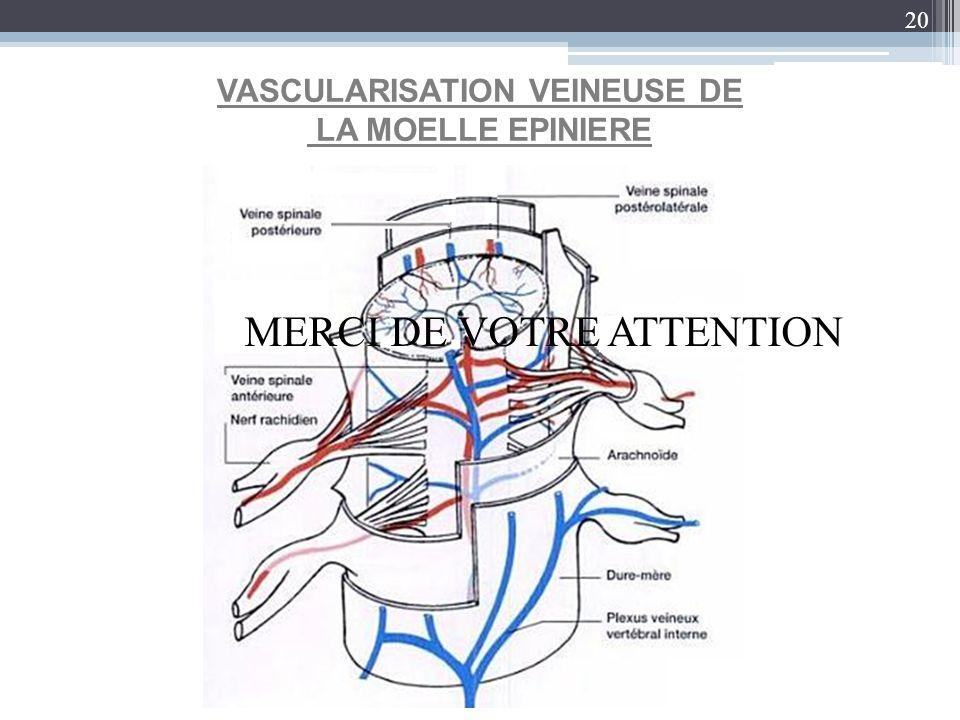 20 VASCULARISATION VEINEUSE DE LA MOELLE EPINIERE MERCI DE VOTRE ATTENTION