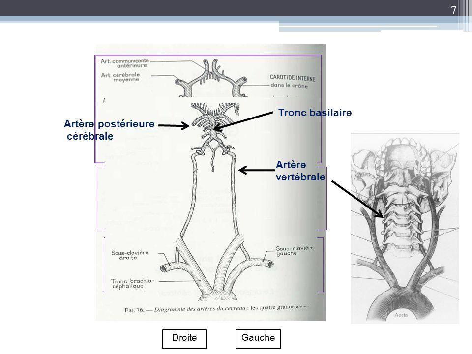 7 Gauche Droite Artère vertébrale Artère postérieure cérébrale Tronc basilaire