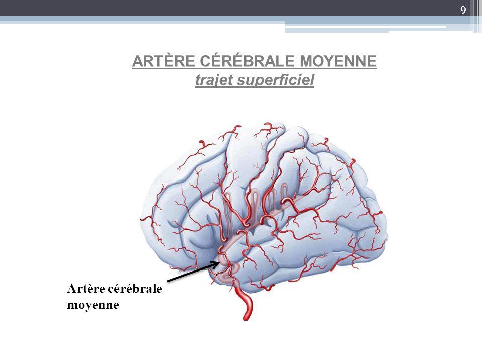 9 ARTÈRE CÉRÉBRALE MOYENNE trajet superficiel Artère cérébrale moyenne