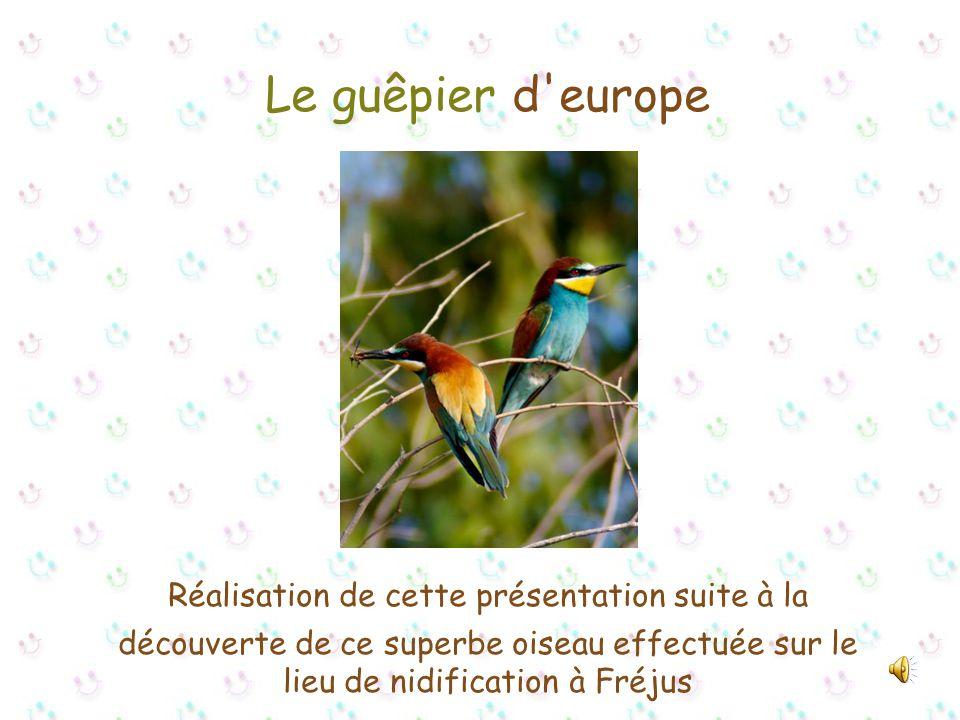 Le guêpier d europe Réalisation de cette présentation suite à la découverte de ce superbe oiseau effectuée sur le lieu de nidification à Fréjus
