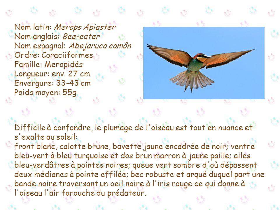 Le guêpier d'europe Réalisation de cette présentation suite à la découverte de ce superbe oiseau effectuée sur le lieu de nidification à Fréjus