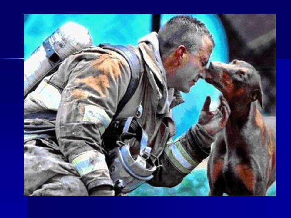 La prochaine image vous donnera chaud au cœur... Une chienne Doberman était enceinte. Le pompier venait de la sauver dans l incendie de la maison, il